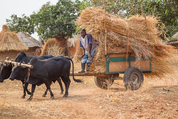 Zambia_2011_1D-7747.jpg