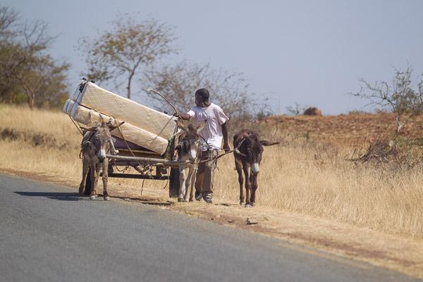Zimbabwe_2012_1D-2204.jpg