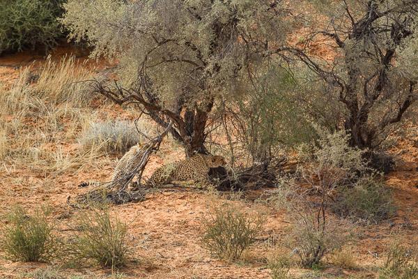 2018_Kalahari_1D-4454.jpg