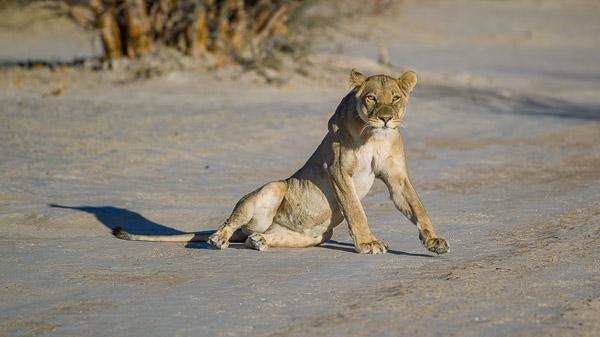 2018_Kalahari_1D-7590.jpg