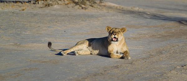 2018_Kalahari_1D-7598.jpg