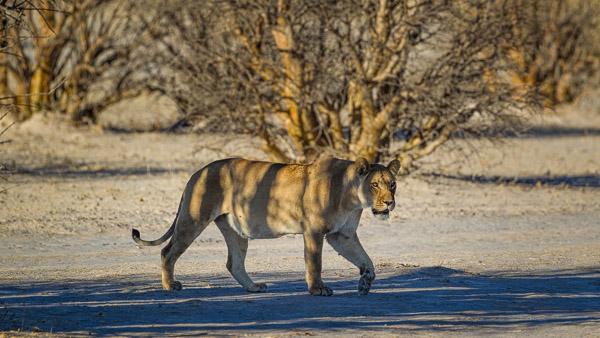 2018_Kalahari_1D-7611.jpg