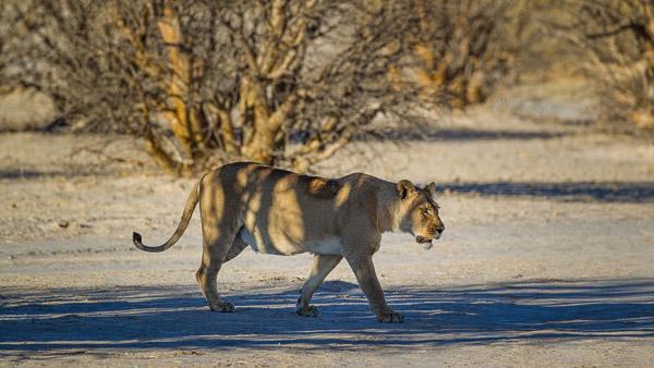 2018_Kalahari_1D-7614.jpg