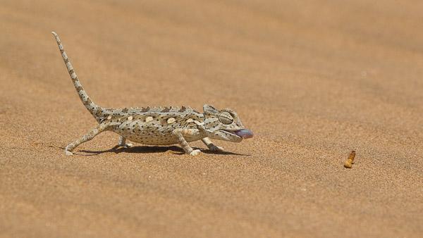 2014_Namibia_1D-8144.jpg
