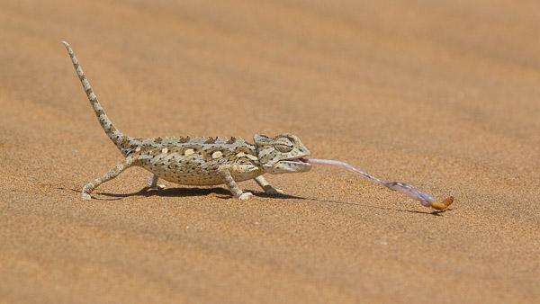 2014_Namibia_1D-8145.jpg