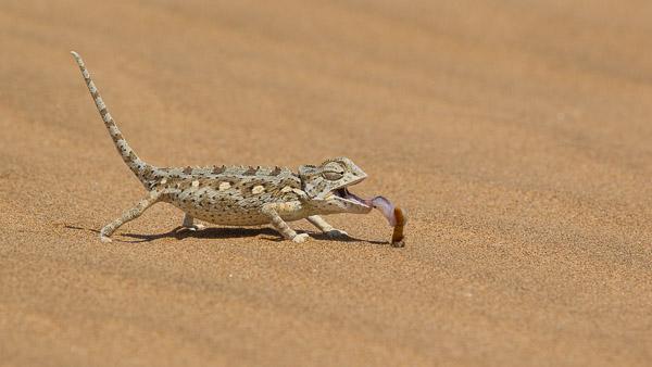 2014_Namibia_1D-8146.jpg